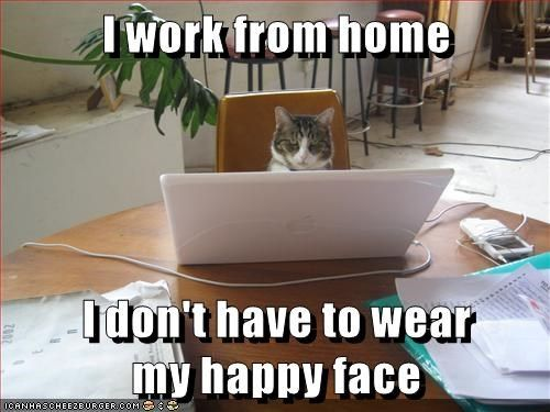 Watch the Unbelievable Cat Funny Memes/work