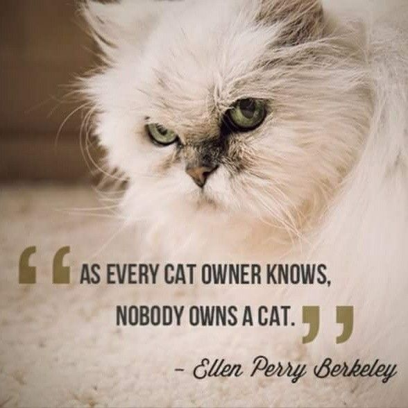 Search your feelings you know it s true cat life with cats long hair fluffy Persian grumpy inspirational quotes Ellen perry berkley people organized under