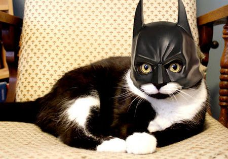 7 Cute and Funny Cat Halloween Costumes
