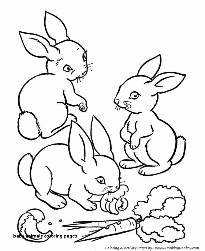 Cute Baby Animal Cute Animal Color Pages Cute Coloring Sheets Husky Coloring 0d Free