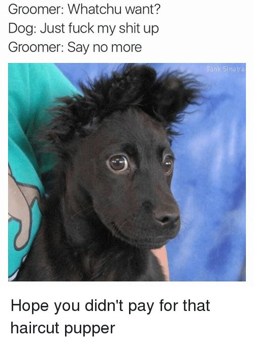 Dogs Fucking and Funny Whatchu want Groomer chu Dog Just