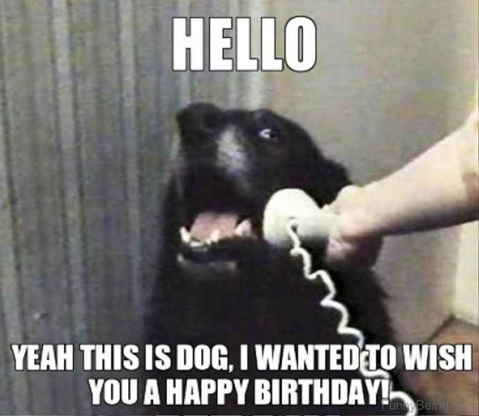 Hello Yeah This Is Dog