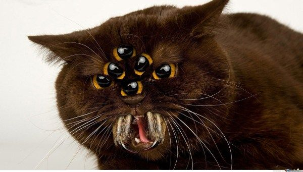 Watch the Unbelievable Funny Spider Cat Pictures