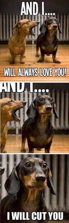 Watch the Unbelievable Funny Wiener Dog Memes