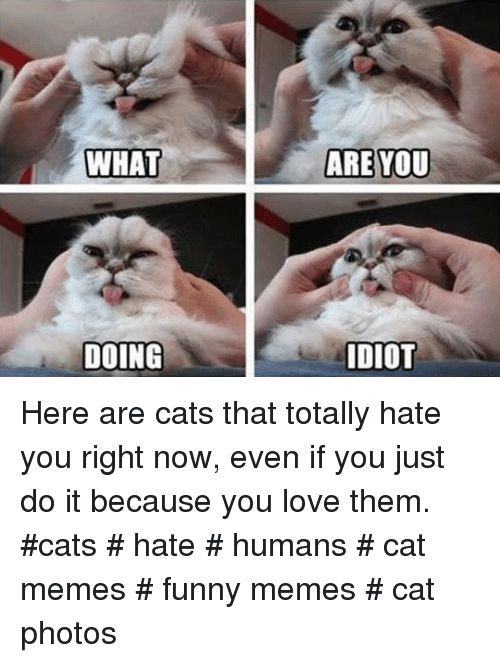 Cats Funny and Just Do It WHAT ARE YOU DOING DIOT Here are