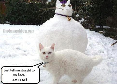 Funny cat snow cat meme