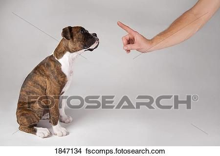 Stock Training of a puppy Fotosearch Search Stock Mural graphs