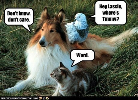 answer apathetic asking best of the week care cat collie dont Hall of Fame know lassie