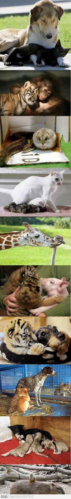 Some Unexpected Friendships between different babies animals so cute And I want them all