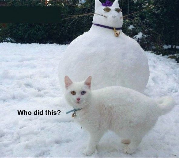 Top 30 Funny cat Picture Quotes most hilarious