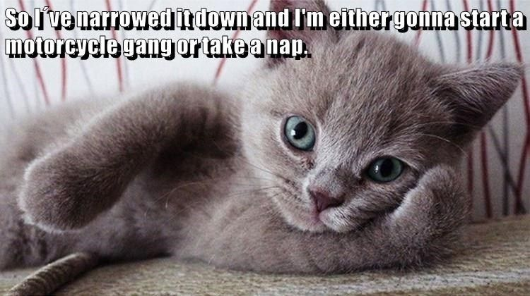 Meme of a posing gray cat that is either going to start a gang or take
