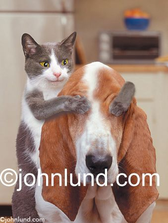 Watch the Wonderful Cat and Dog Pictures Funny