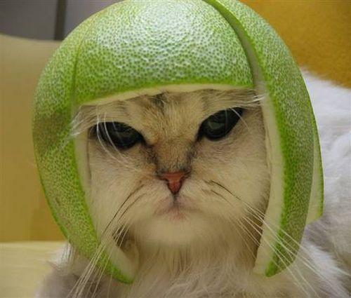 it s a little lime football helmet haha