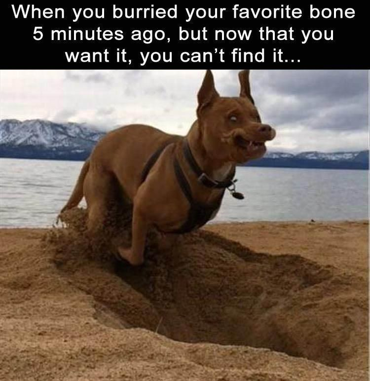 Funny Animal Picture Dump The Day 25 Pics
