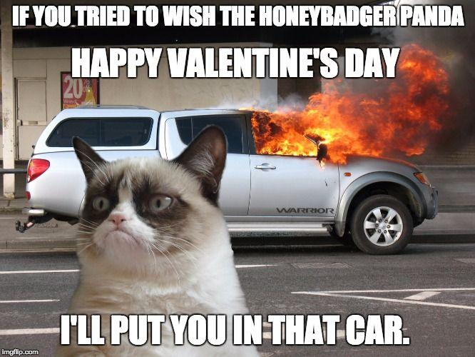 108 Best Grumpy Cat Memes And Socks Funny Cats Hilarious