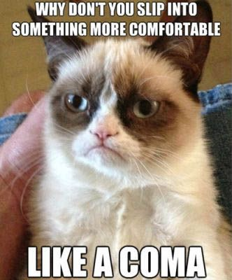 best funniest grumpy cat 1